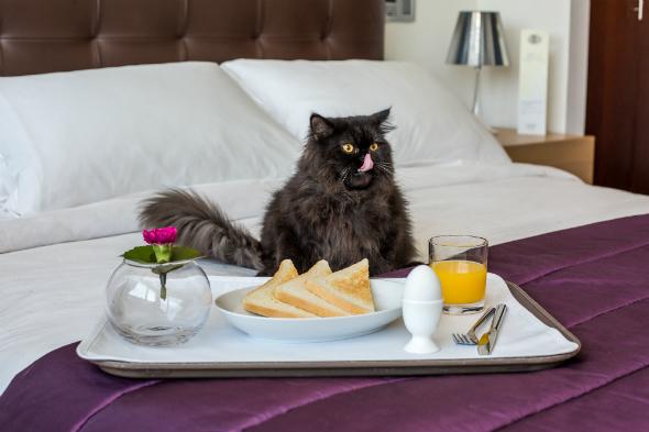 cat room service