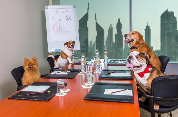 dog board meeting