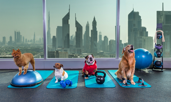 Dogs working out