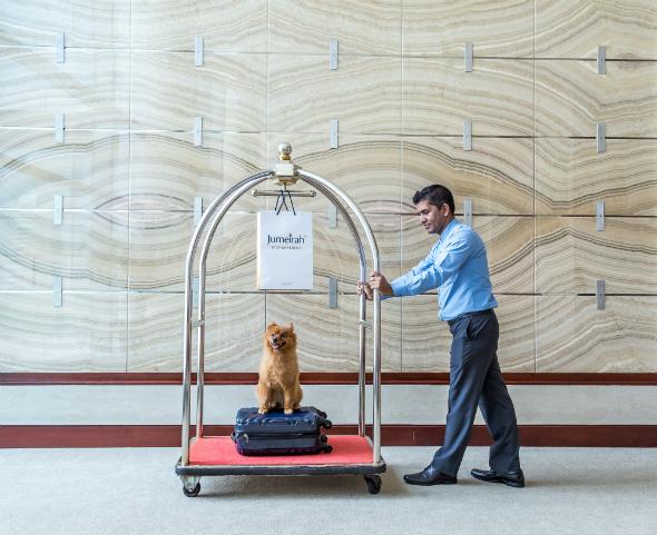 dog check in