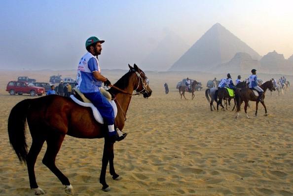 sheikh mohammed horses