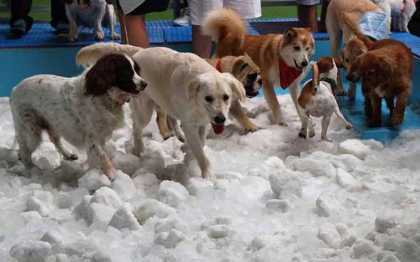 doggie-snow