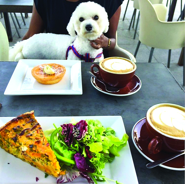 Lime Tree Cafe - Pet Friendly Restaurants In Dubai