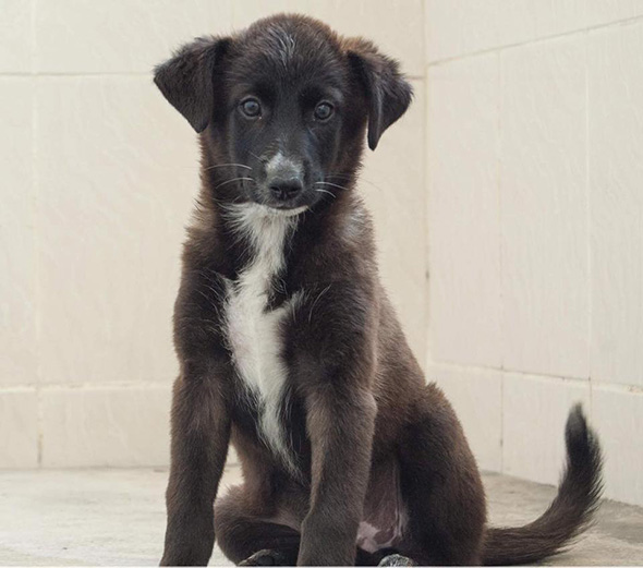 36 dogs and puppies in Dubai that need foster or forever