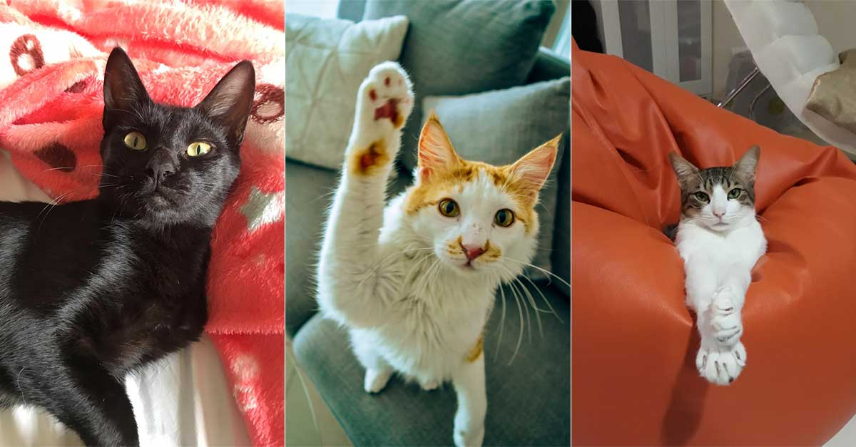 Give A Cat Their Forever Home At Kittysnip S Adoption Day What S On Dubai