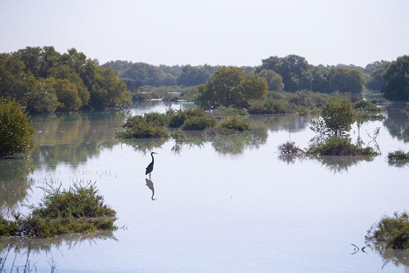 Mangroves Abu Dhabi