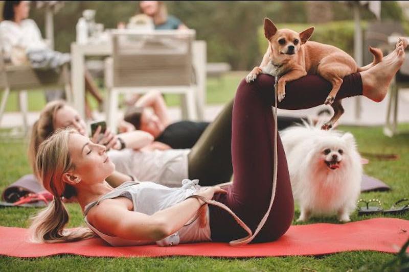 Puppy Pilates class online