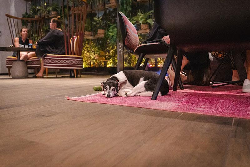 social company dog friendly