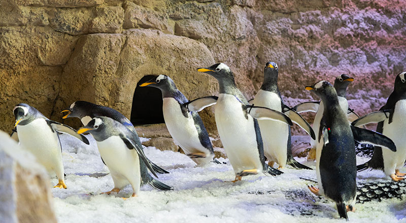 https://whatson.ae/wp-content/uploads/2020/07/penguins-dubai-aquarium-featured.jpg