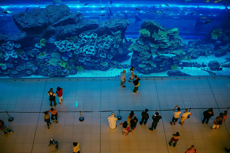 Dubai Mall Dubai Aquarium