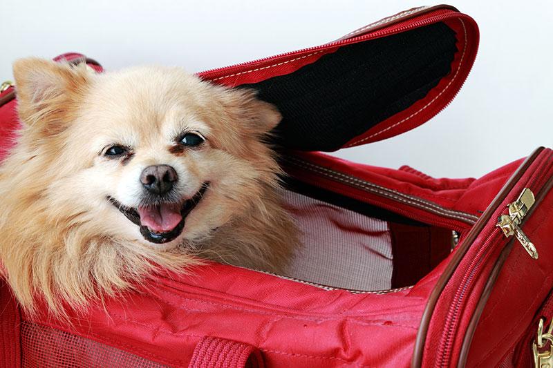 hotel indigo dog friendly