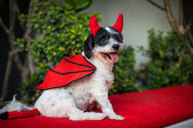 radisson red halloween