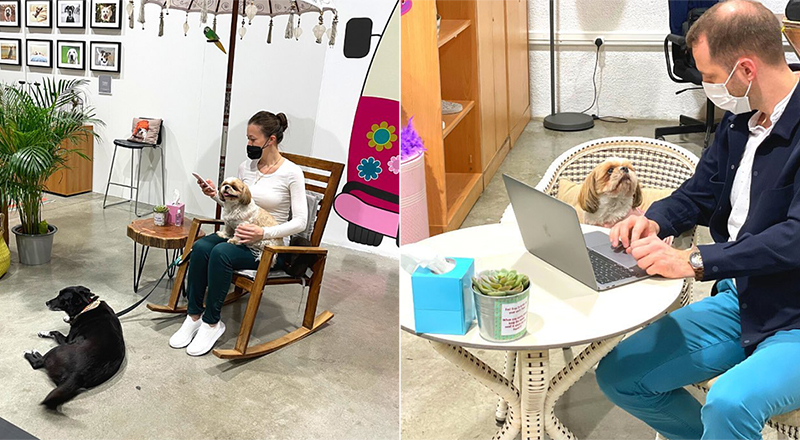 This pet-friendly co-working space has just opened in Dubai