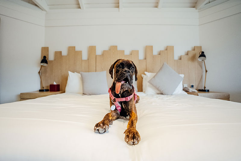 ja resort dog friendly