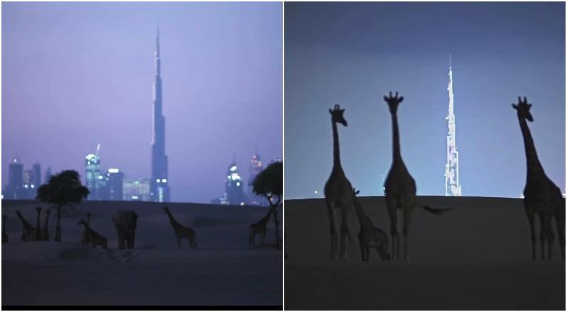 sheikh hamdan wildlife