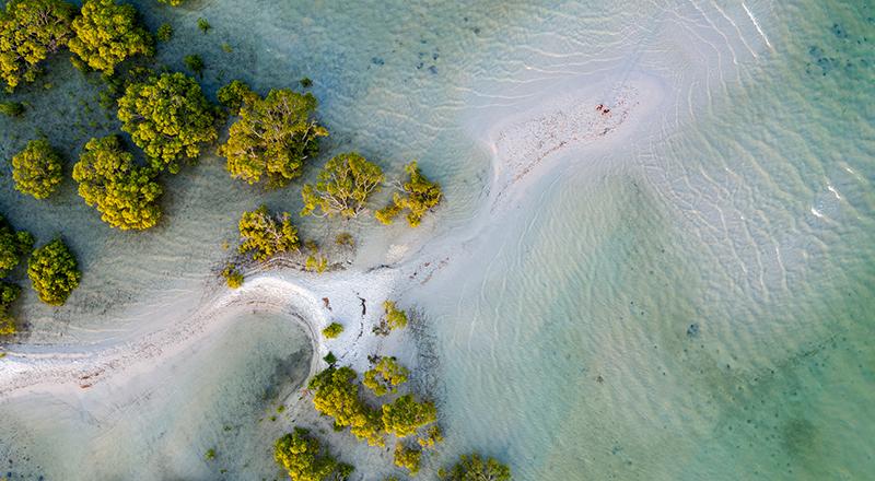 getty-mangrove-park