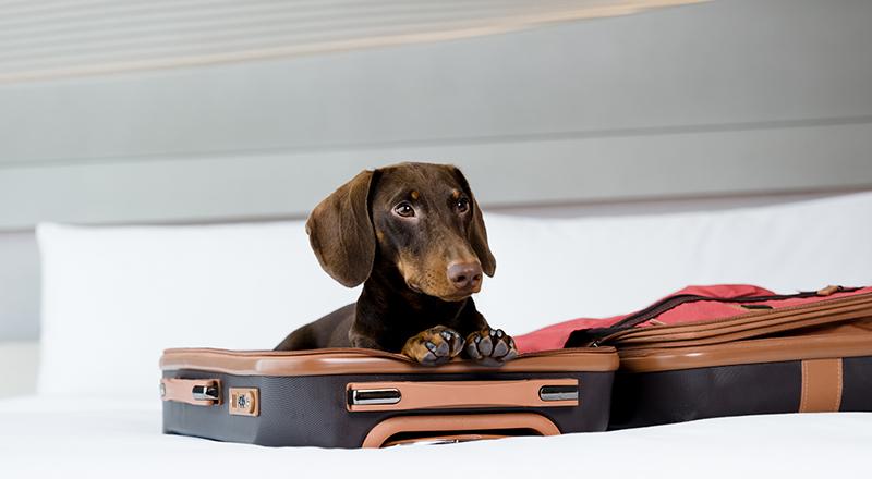Me Dubai Dog-friendly hotel